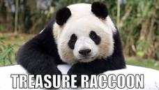 TREASURE RACCOON