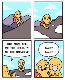 BIRD tweet tweet